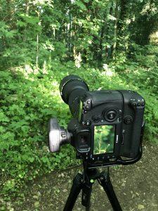macrofotografie zonder macrolens