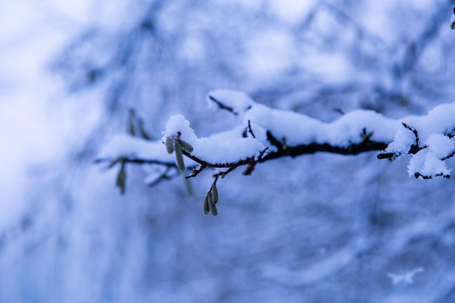Een zware last van sneeuw