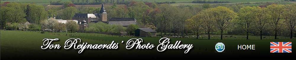 Ton Reijnaerdts Photo Gallery