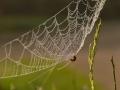 Voor Web en Dauw