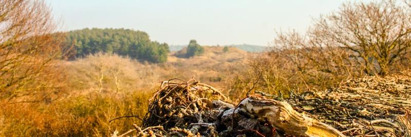 Duinenlandschap, Kennemerland