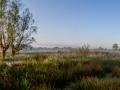 Wilgen in de mist (Keuzemeersen, Gent)