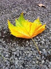 Herfst, Banneux