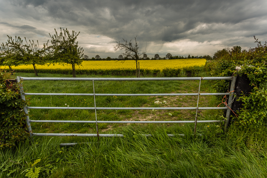 Koolzaad en regenwolken, Eckelrade