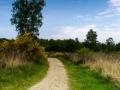 Pad naar het bos (NP De Meinweg, Zuid-Limburg)