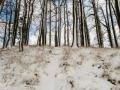 Stammen in de sneeuw, Honthem
