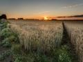 De rand van het graan, Wolfshuys