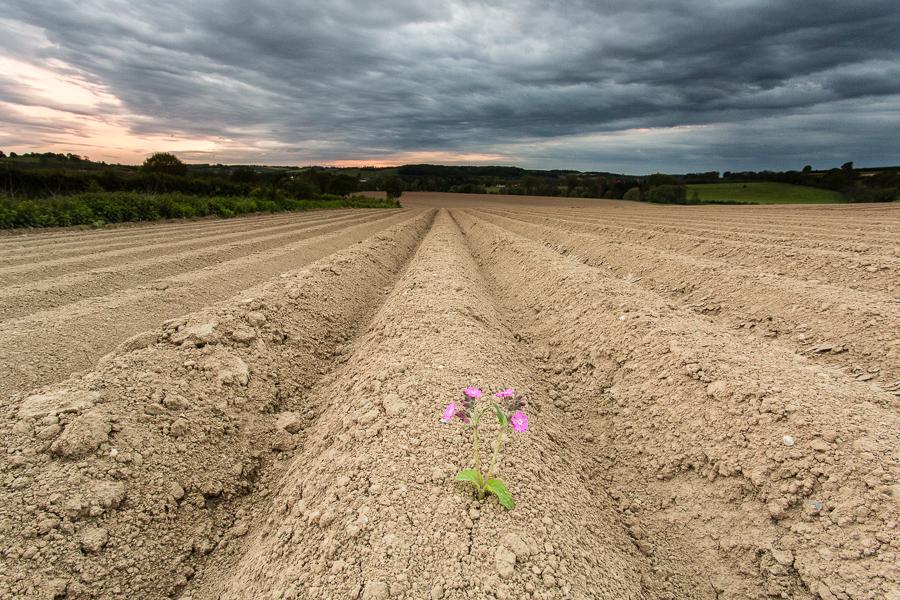 Eenzame bloem, Eyserheide