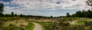 01052001 - Weg door de heide (NP De Meinweg, Limburg)