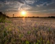 02072502 - Zomeravond boven het korenveld, Margraten