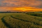02090702 - Gele velden, Eyserlinde