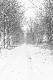 04012405 - Witte weg, Bruisterbosch