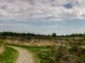 Weg door de heide (NP De Meinweg, Limburg)