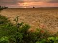 Klaprozen langs het graan, Sibbe