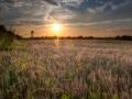 Zomeravond boven het korenveld, Margraten