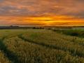 Gele velden, Eyserlinde