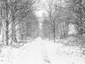 Witte weg, Bruisterbosch