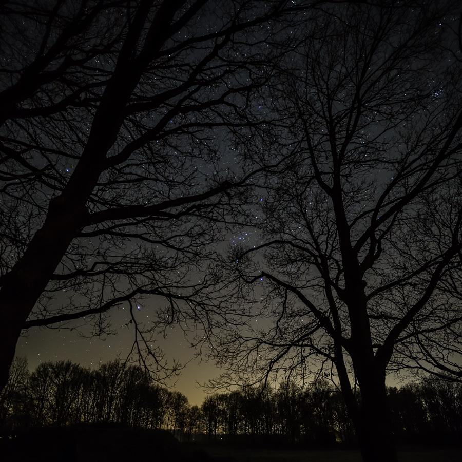 Orion door de bomen