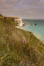 Witte kusten, Dover