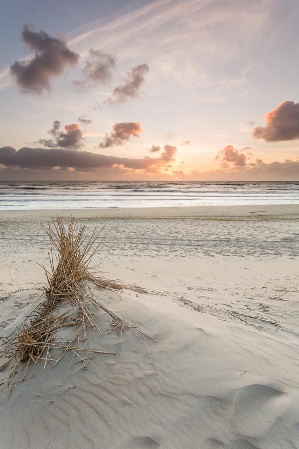 Duingras in het zand, Texel