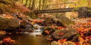 Over de brug in de herfst, La Hoëgne