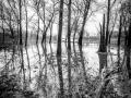 Treurende bomen, Eyserbeemden
